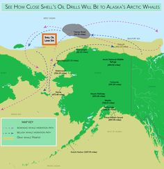 See How Close Oil Drilling Will Got to Arctic Whales This Summer: Growing noise levels and vessel traffic from energy prospecting are also threats to the region's whales.