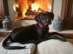 William Chillin by the fire