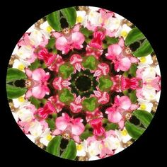 "https://flic.kr/p/3cFQUs | Begonia Kaleidoscope | Kaleidoscope made with <a href=""http://krazydad.com/makeyourown/index.php"" rel=""nofollow"">krazydad.com/makeyourown/index.php</a> website"