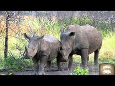 Video Südafrika: Die faszinierenden 3 - Kapstadt, Krüger & Viktoria Fälle mit Rhino Afrika
