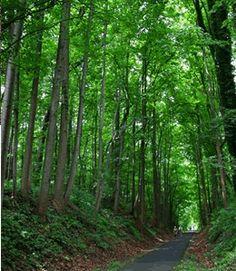 W & OD Trail at Washington and Old Dominion Regional Park. Ashburn, VA