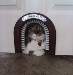 Cat Door with a brush