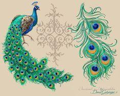 very Beautiful peacock Flowers Arrangement Peacock Quilt, Peacock Decor, Peacock Art, Peacock Design, Peacock Feathers, Peacock Drawing, Peacock Tattoo, Peacock Painting, Pfau Tattoo