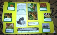 Toad lapbook - use for Amphibians honor.