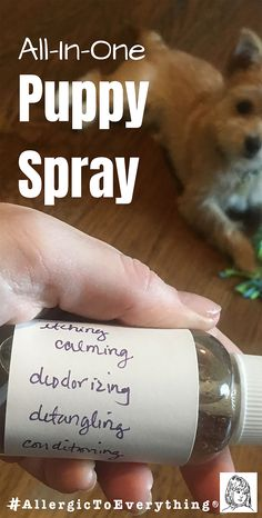 A DIY leave-in puppy spray recipe to stop itching, deodorize, detangle, condition, and calm your pup. It even works to freshen up their clothes and bed! Vitamin E Oil, Food Allergies, Adhd, Deodorant, Conditioner, Calm, Puppies, Recipes, Clothes