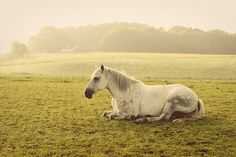 This reminds me of when my horses would be laying in the field and they would let me come up and lay down with them :)