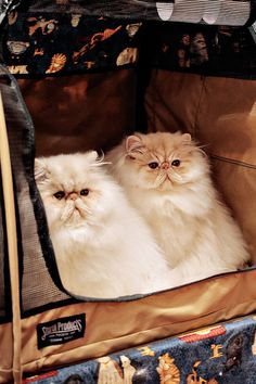 Double cute cats