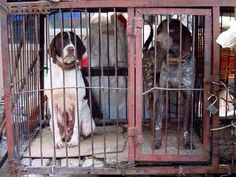 Once someone's beloved pet, stolen to be consumed. Cruelty not culture #yulindogmeatfestival #yulingetdogsoffthemenu pic.twitter.com/uYvnQ4PRsF