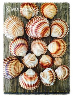Sea Shells Instant Download Photo Beach House Decor by MOIRAPINA