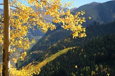 Telluride | Flickr - Photo Sharing! River, Explore, Mountains, Nature, Photos, Painting, Outdoor, Art, Pictures