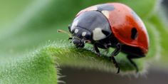 The service everyone needs, but nobody asks for. Shipping Ladybugs.