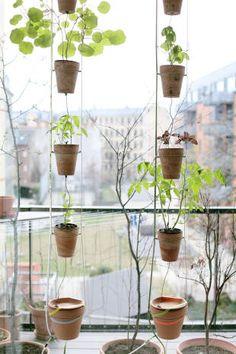 Window farming - Next project