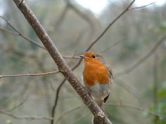 Robin <3