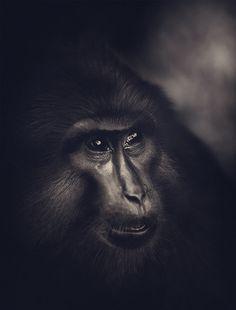 Ade Santora est un photographe indonésien qui capturent des paysages, des moments de vies et des portraits (aussi bien d'hommes que d'animaux). Les cadrages, l'éclairage et les retouches des images apportent une atmosphère incroyable à chaque photographie. Si comme nous vous avez un coup de coeur, découvrez d'autres clichés sur 500px et sur sa page […]