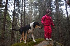 Gårdstunet Hundepensjonat: Rolig helg på tunet, og deilig skogsturer i deilig...