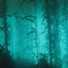 Kida Disney, Kubo And The Two Strings, Kelp Forest, The Shape Of Water, Sombre, Merfolk, Underwater World, Underwater Lake, Deviantart