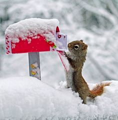 This little guy knows Valentine's  day is next month. Looks like he is sending out his cards out early :)