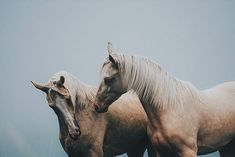 Misguided ghosts ☀#equinebywengdahl
