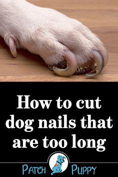 Cats – Dogs Nails – How to Cut Dog Nails That Are Too Long and Get the Correct Dog Nail Length Loading. Cats – Dogs Nails – How to Cut Dog Nails That Are Too Long and Get the Correct Dog Nail Length Clipping Dog Nails, Trimming Dog Nails, Dog Health Tips, Pet Health, Dog Care Tips, Pet Care, Puppy Care, Dog Nail Clippers, Dog Grooming Tips
