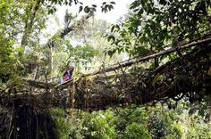 Discover India's Living Root Bridges: Astonishing Man-Made Natural Wonders: Overview of the Living Root Bridges