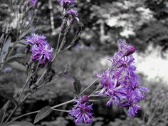 black white and purple photography | Recent Photos The Commons Getty Collection Galleries World Map App ...