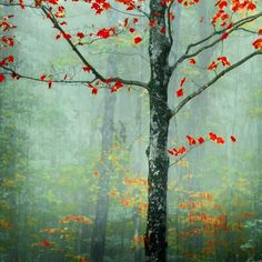 another day, another fairytale - decorative photography - red leaves fog texture decor - stowe, vermont
