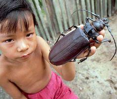 Besouro gigante (Titanus giganteus), encontrado na América do Sul, é um dos maiores insetos do mundo, chegando a medir 17 cm de comprimento de corpo, mais o tamanho das antenas, que varia em cada individuo. Possuem grandes mandíbulas, que servem para cortar galhos de árvores onde a fêmea deposita os ovos, e os machos adultos não se alimentam, tendo como único objetivo se reproduzir; as larvas deste besouro podem chegar a serem ainda maiores que os adultos.