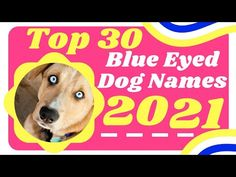 Top 30 Best Blue Eyed Dog Names for Male and Female With Meaning 2021 ! Unique Puppy Names - YouTube Cute Names For Dogs, Best Dog Names, Puppy Names, Pet Names, Best Dogs, Cute Dogs, Police Dog Names, Police Dogs, Blue Eyed Dog Names