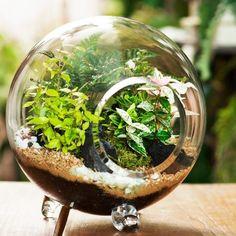 Fishbowl Garden