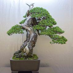 Bonsai Tonight | The blog alternative to mainstream bonsai media | Page 2