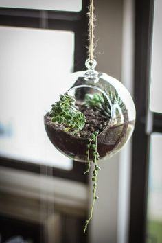 zimmerpflanzen hängend pflanzampel sukkulenten glassphäre