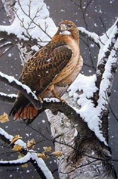 Lady Hawk...Jerry Gadamus