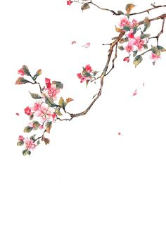Flower Wallpaper, Wallpaper Backgrounds, Iphone Wallpaper, Chinese Painting, Chinese Art, Japanese Painting, Flower Frame, Flower Art, Watercolor Flowers