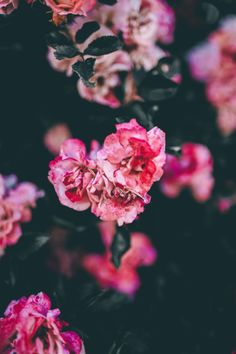 Love Flowers, Vintage Flowers, Beautiful Flowers, Floral Photography, Nature Photography, Summer Feeling, Planting Flowers, Landscape, Iphone Wallpapers