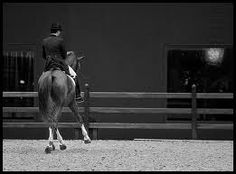 equestrian equine cheval pferde caballo   BW chestnut dressage half pass rearview