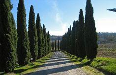 The entrance of Agriturismo Guardastelle (San Gimignano, Italy - Tuscany) - Farmhouse Reviews - TripAdvisor  www.guardastelle.com