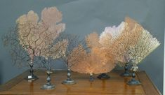 Sea Fans mounted on stands, French