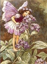 The Heliotrope Fairy by Cicily Mary Barker