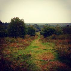 The path winds into the heart of the forest beneath a misty white sky and surrounded by autumn's beautiful foliage. #path #footpath #windy #woods #forest #english #moody #evocative #beautiful #pastoral #landscape #verdant #autumn #colour #bronze #trees #newforest #bucolic #pastoral #nature #country #sunset #english #mist #peace #whitesky #cloud