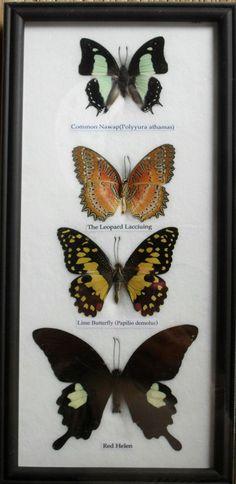Butterflies - office