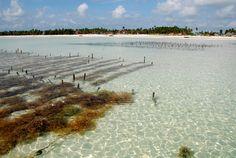 Zanzibar Shallows | Seaweed Industry Association