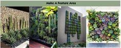 Cacti Feature Area