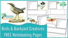 Birds and Backyard Creatures Notebooking Pages | Homeschool Giveaways