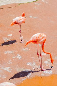 Flamingos in the sun by Ismael Embid on 500px