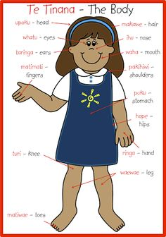 Te tinana / The body (Maori) Spanish Lessons, Learning Spanish, Waitangi Day, Maori Words, Free Printable Clip Art, Language Immersion, Maori Designs, Maori Art, Thinking Day