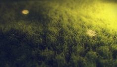 Scene create by Rob Redman  with CInema 4D and Maxwell Render   Tutorial Maxwell Grass