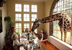 I want to go to there! : Giraffe Manor : nairobi : Kenya