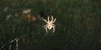 Spider Man Science: A team of physics students in the U.K. have worked out that spider silk could be strong and tough enough to stop a moving train. - See more at: http://www.the-scientist.com//?articles.view/articleNo/34539/title/Spider-Man-Science/#sthash.HYiQ3lBa.dpuf  on The Scientist