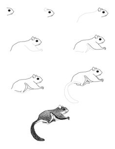 northern flying squirrel drawing - Google Search