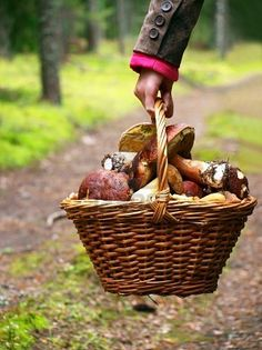 Cool crisp days, wicker baskets, cozy sweaters and coats ... and wild mushrooms too boot!!